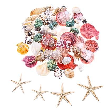 Amazon Lokipa Sea Shells Mixed Ocean Beach Seashells Natural