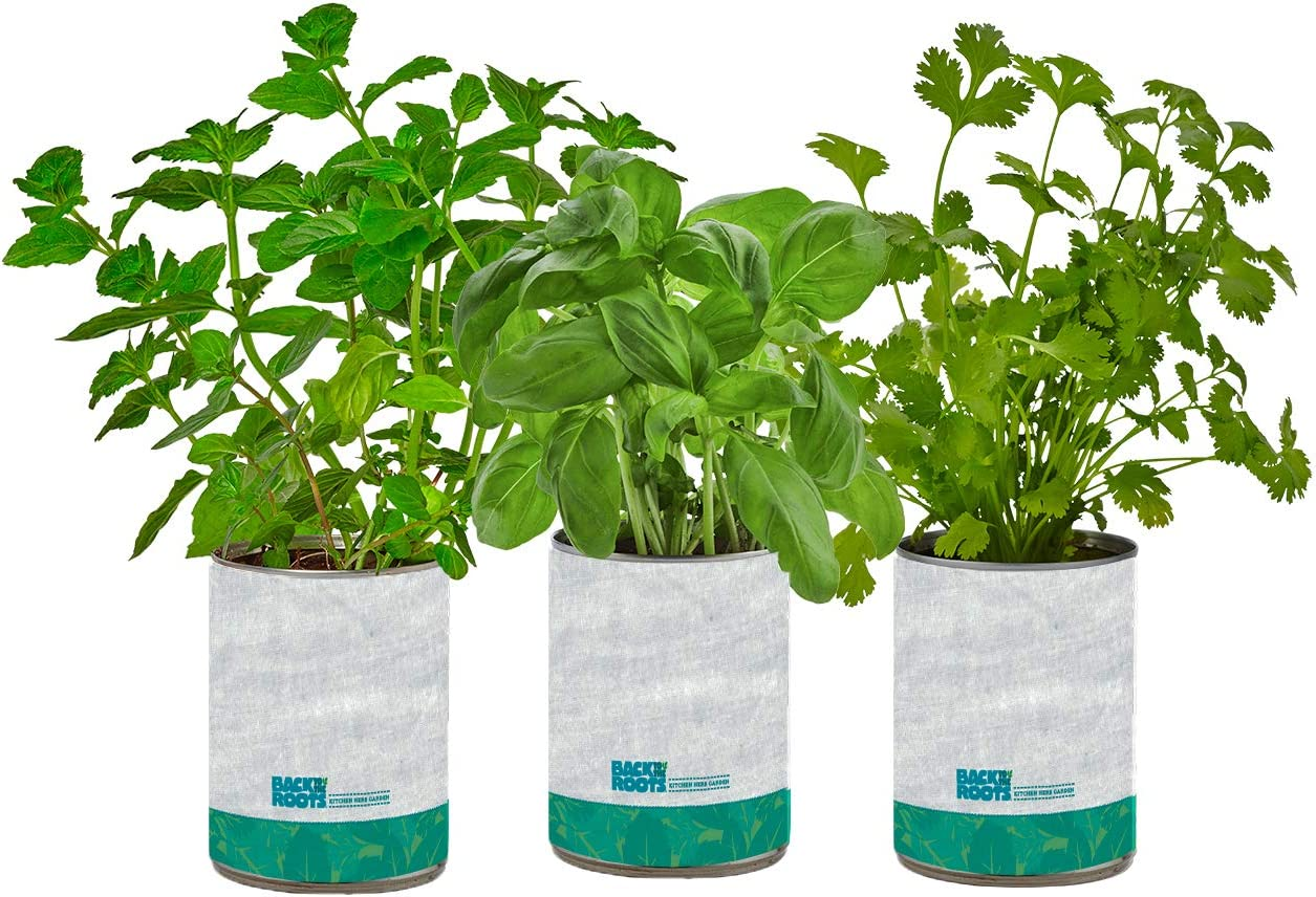 Back To The Roots Garden In A Can Kitchen Herb Garden 3 Pack Variety Basil Cilantro Mint Diy Indoor Organic Herb Growing Kit Grow Edible Herbs In Your Home Perfect Cooking Gift Amazon Ca Patio Lawn Garden
