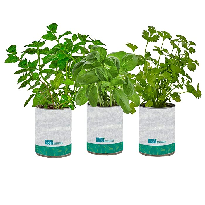Back to the Roots New 22206 Kitchen Garden, Complete Herb Kit Variety Pack of Basil, Mint, and Cilantro