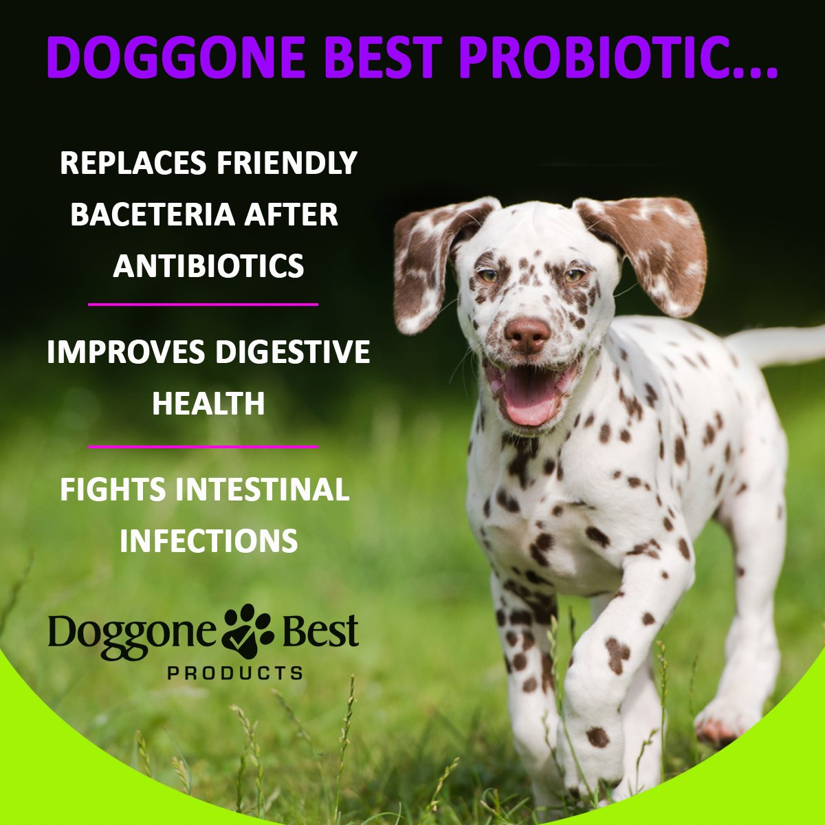 Amazon : Probiotics For Dogs  Powder  Best Canine Acidophilus For  Digestive Health  Relieves Diarrhea & Gas  Boosts Immune System  Helps  Bad Breath
