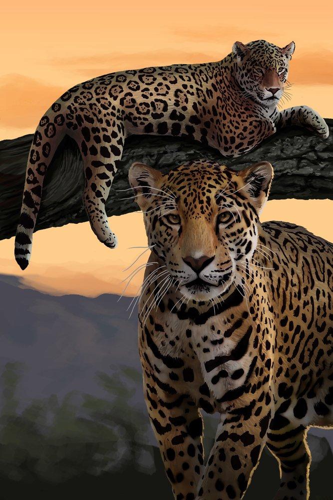 Jaguars 36 x 54 Giclee Print LANT-49900-36x54 36 x 54 Giclee Print  B017EA1XZO