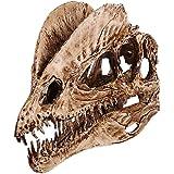 Velociraptor Skull Dinosaur Polystone Statue Scale 1 1