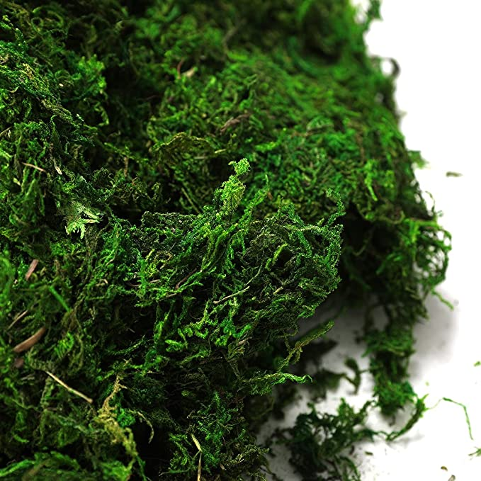 Fresh Green Byher 92926 Preserved Forest Moss 16OZ