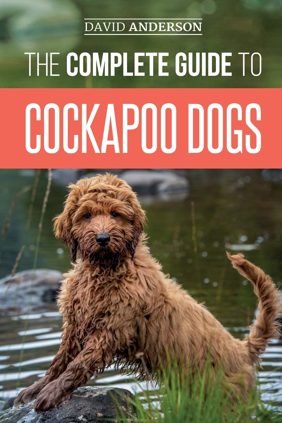 The Complete Guide To Cockapoo Dogs Everything You Need To