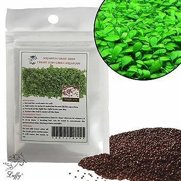 LUFFY-Semillas de plantas para acuario-Planta verde vibrante para acuarios de peces de