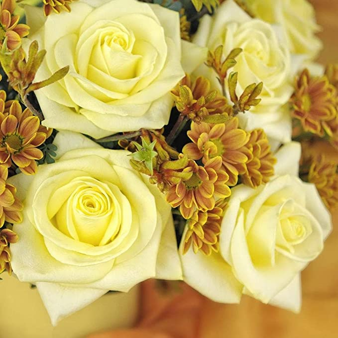 Semillas de Rosas Amarillo 10 PCS Semillas de Flores Raras para Jardin, Huerto, Balcon Interior: Amazon.es: Jardín