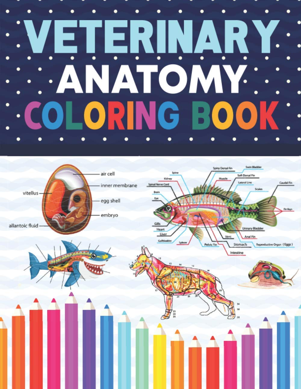 Amazon Com Veterinary Anatomy Coloring Book Animal Anatomy And Veterinary Physiology Coloring Book Dog Cat Horse Frog Bird Anatomy Coloring Book Vet Tech Veterinary Zoology Anatomy Coloring Book 9798570596542 Publication Donnaniczell Books