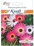 Mesembrynthemum or Ice flower - Flower Seeds By Kraft Seeds