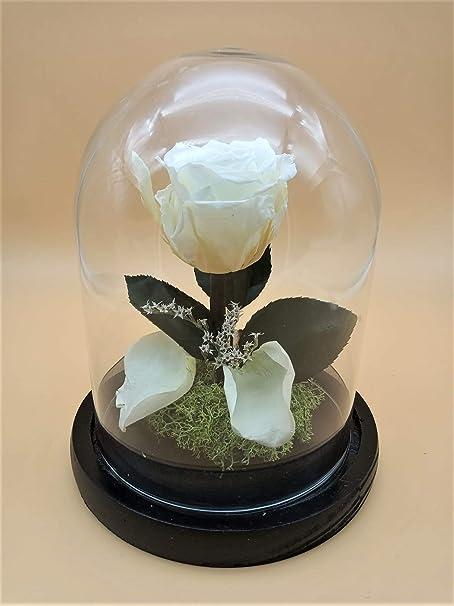 Almaflor Rosa eterna preservada Blanca. Cúpula Bella y Bestia. Envío Prime. Rosa preservada Blanca. Hecho en España.: Amazon.es: Hogar