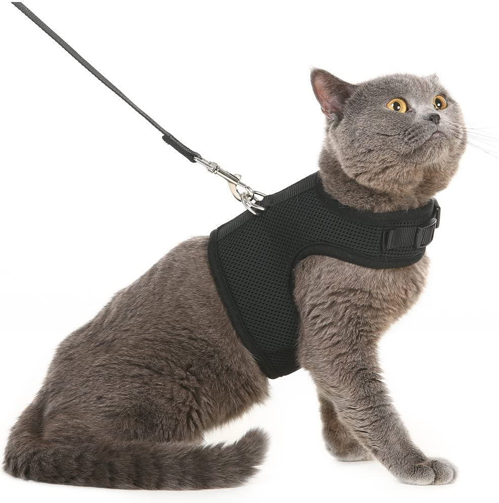 Bingpet Escape Proof Cat Harness And Leash Adjustable Soft Mesh Holster Style Best For Kitten Walking Amazon Co Uk Pet Supplies