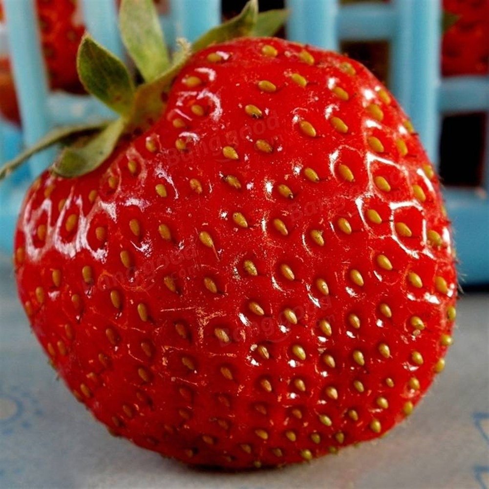 Doubleer 100Pcs/pack Giant Strawberry Seeds Garden Balcony Decor Fruit Seeds