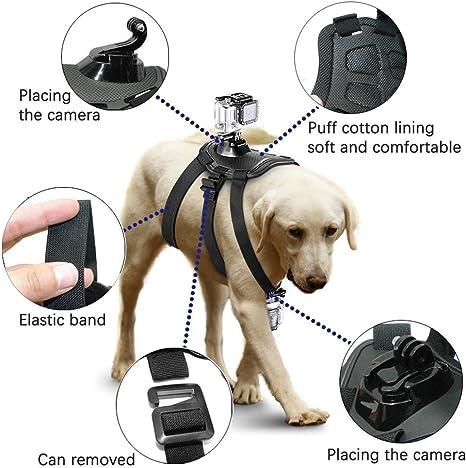 Firststore GoPro Montar el arnés del perro: Amazon.es: Electrónica
