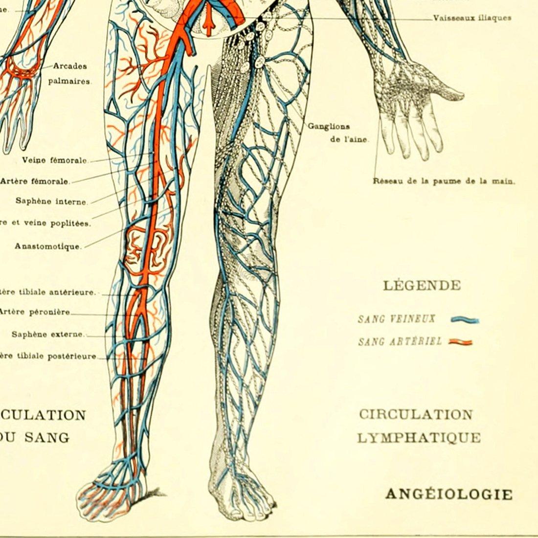 Amazon.com: Meishe Art Vintage Poster Print Human Anatomy Reference ...