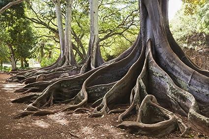 Allerton Garden, Part Of National Botanical Garden Near Poipu; Kauai,  Hawaii, United