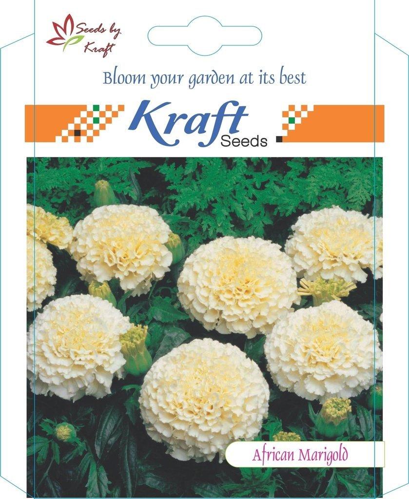 Marigold flower seeds buy marigold flower seeds online at best kraft seeds african marigold f1 hybrid white vanilla flower seeds mightylinksfo