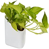 Sheetal Blume Prism Indoor and Outdoor Wall Hanging Planter -Pack of 12