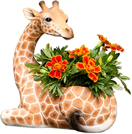 Unusual home decor house plant. Yellow Giraffe planter with air plant