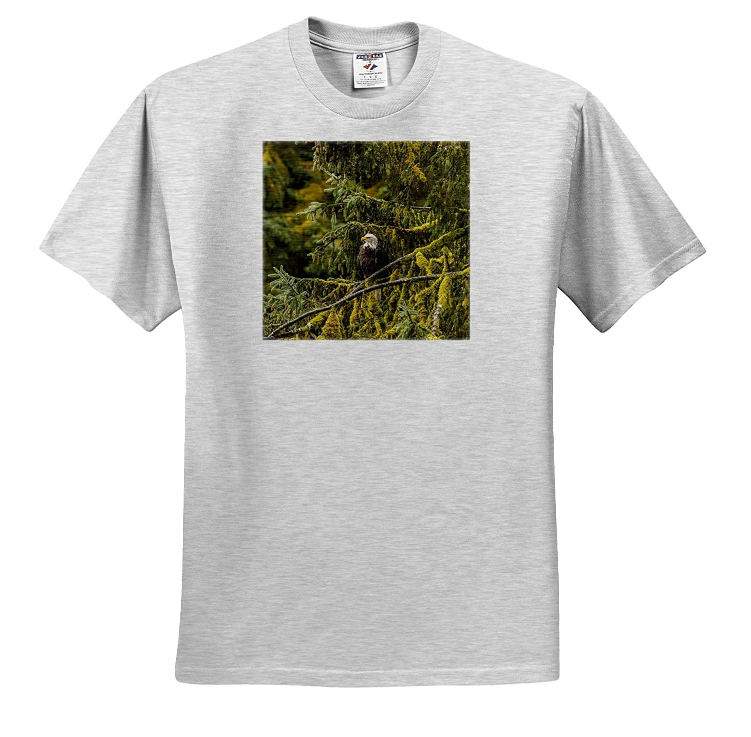 ts/_314417 - Adult T-Shirt XL 3dRose Danita Delimont Tongass National Forest Bald Eagle in Tree Alaska Eagles USA