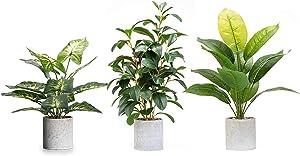Velener Artificial Potted Green Leaf Plant in Pot for Home Decor (Set of 3)