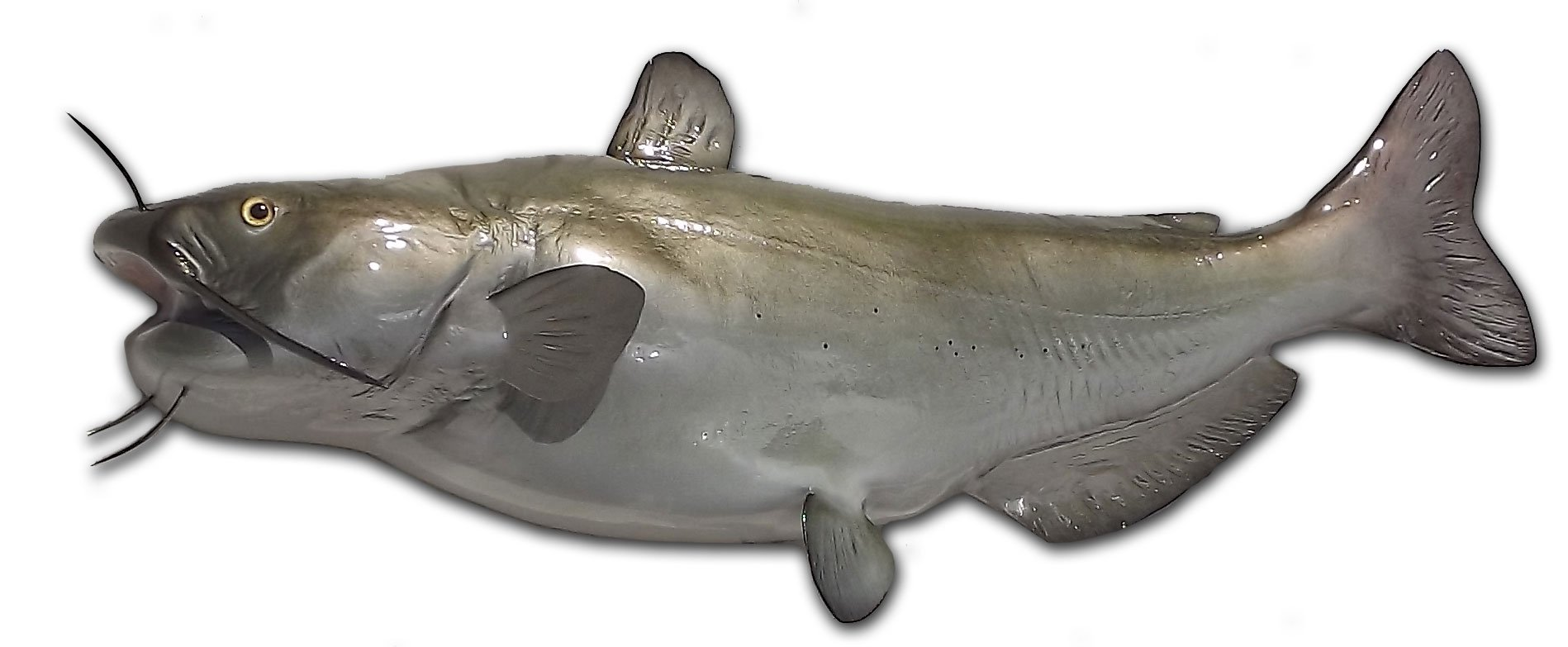 31'' Channel Catfish Half Mount Fish Replica - Low Price Guarantee -  Perfect Cabin Themed Wall Decor