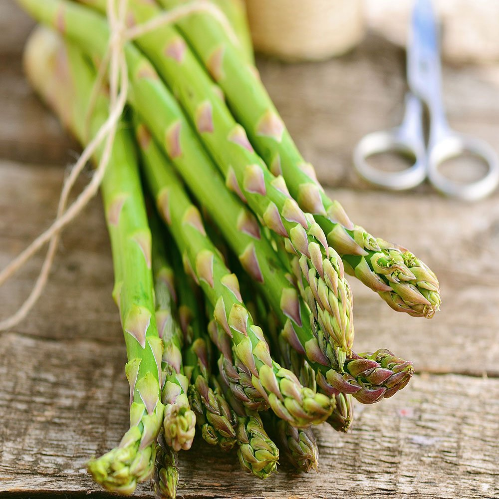 Jersey-Knight 25 Live asparagus bare root plants -2yr-crowns