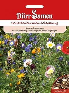 und mehrjährig Großpackung 100gr Schattenblumen-Mix  ein