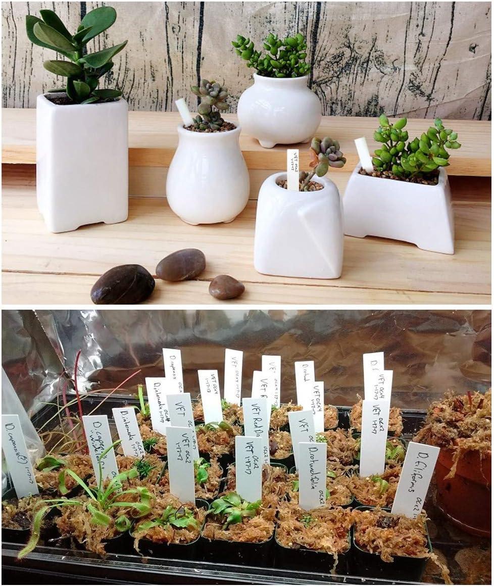 Blanco 100 unids Pl/ástico pl/ástico marcadores de Plantas 10x2cm Etiquetas de Semillas Impermeables Etiquetas de jard/ín Etiquetas de Plantas Reutilizables