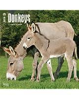 Donkeys 2018 Wall Calendar