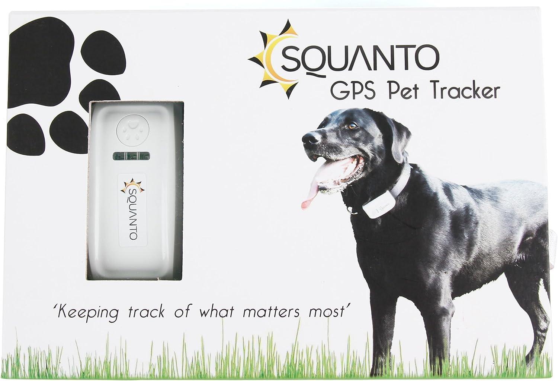 SQUANTO Collar Marcador para animales (perros, caballos ...) & (SMS) GPS GSM con localización en tiempo real predeterminado perímetro de seguridad y correa regulable incluida: Amazon.es: Electrónica