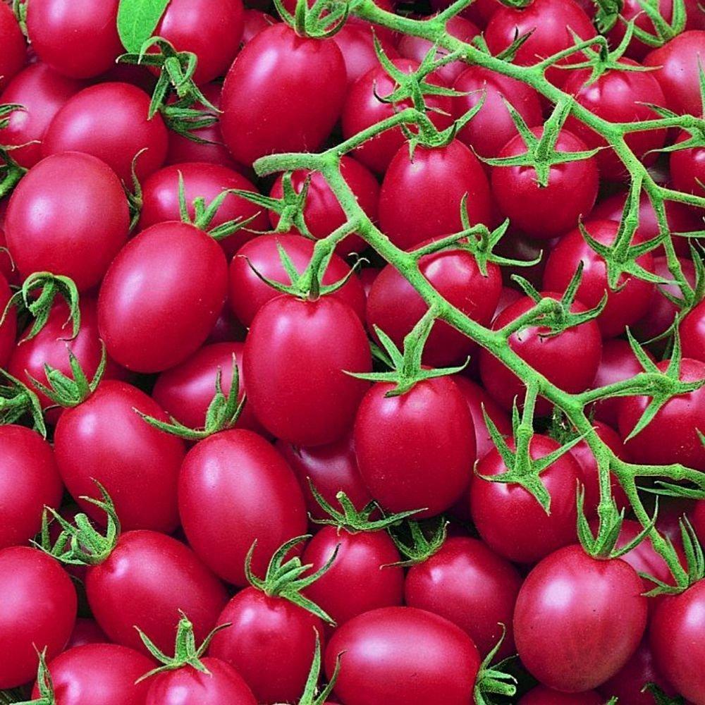 Cherrytomate - Tomate - Pink Grape - sehr ertragreich - süß - 10 Samen exotic-samen