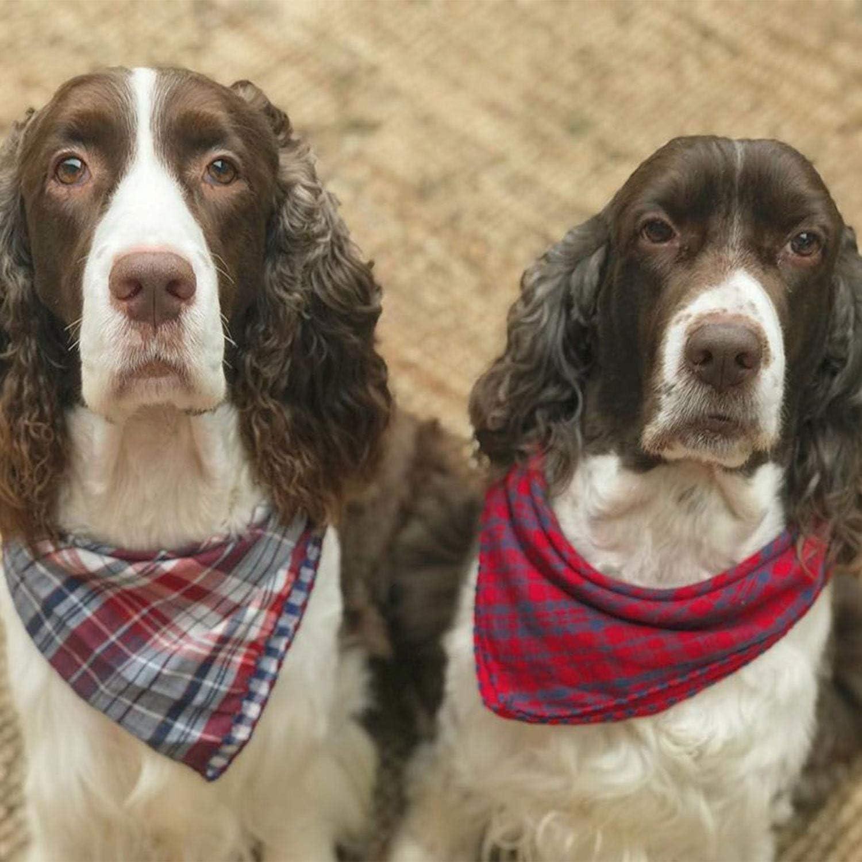 Bandanas para perros de todos los tamaños