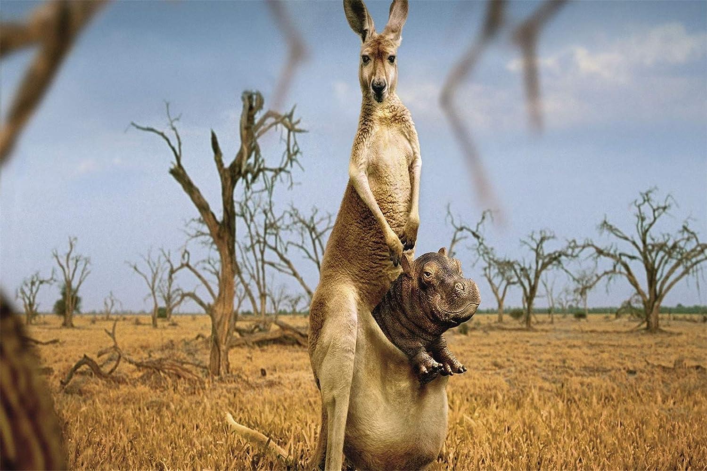 Rompecabezas 500 Piezas Para Adultos Adultos, Juegos De Rompecabezas Para La Familia, Rompecabezas De Cartón, Juegos Educativos - Happy Kangaroo