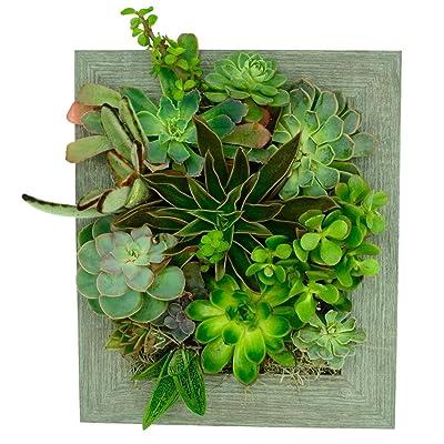 Portrait Gardens Wall Planter (8x10) - Instant Vertical Succulents Herbs Indoor Garden DIY Picture Cactus Plastic Ready to Hang Pin Plant Display Water : Garden & Outdoor