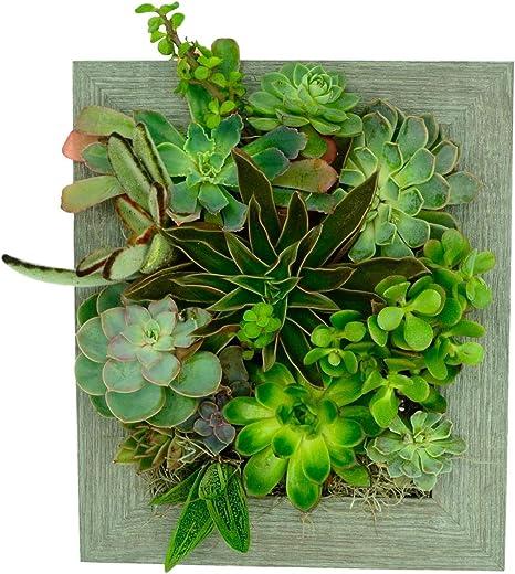 Maceta de pared vertical para jardín vertical – instantánea, plantas suculentas, plantas de interior y jardín con imagen de cactus de plástico, listo para colgar: Amazon.es: Hogar