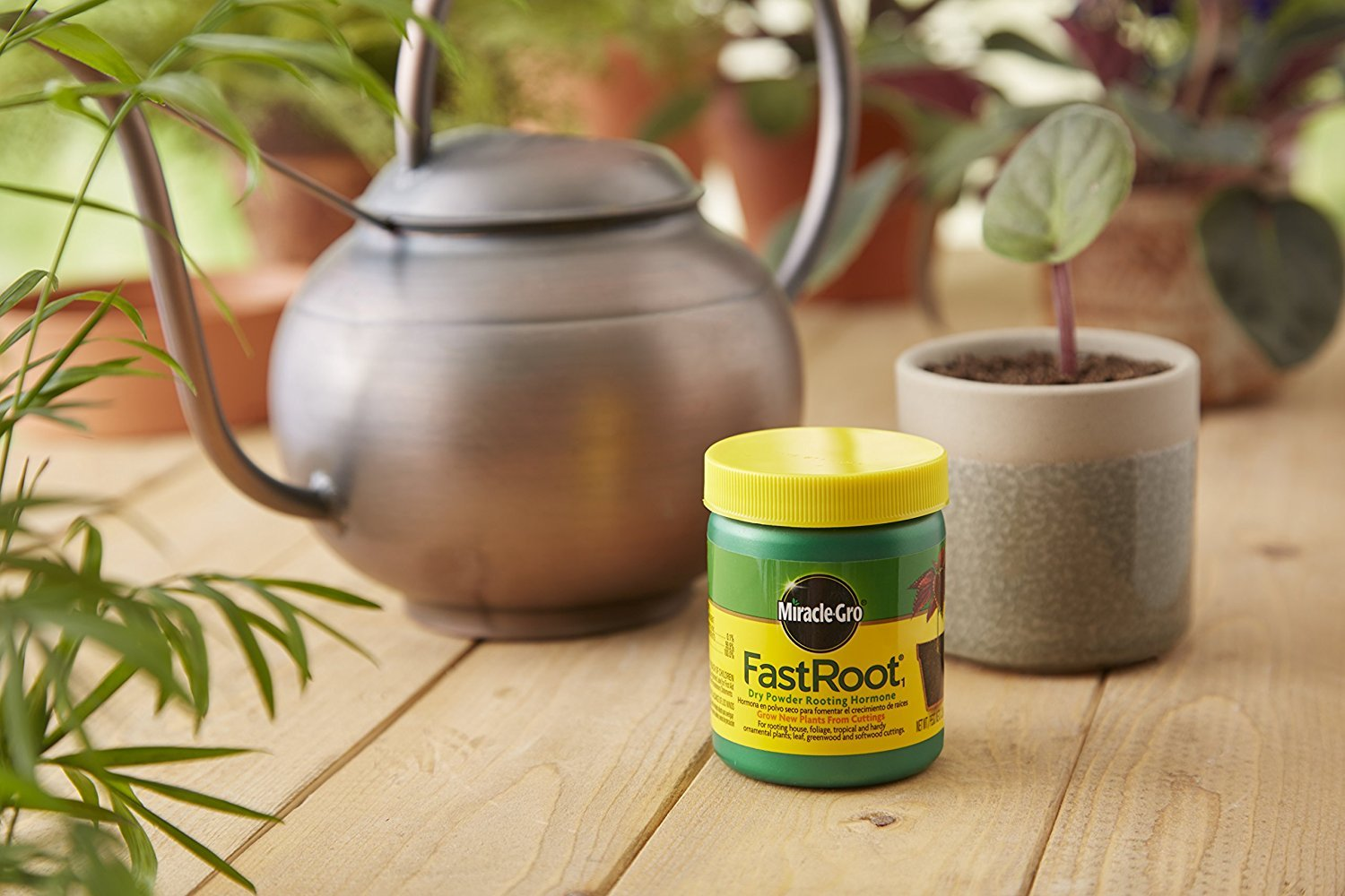 Amazon.com : Miracle-Gro FastRoot Dry Powder Rooting Hormone Jar, 1 ...