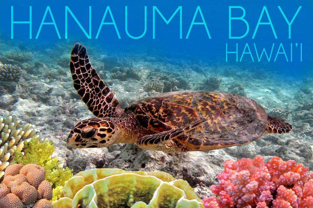 Hanauma Bay , Hawai ' i – Sea Turtle and Coral 36 x 54 Giclee Print LANT-51922-36x54 36 x 54 Giclee Print  B017E9Z7XE