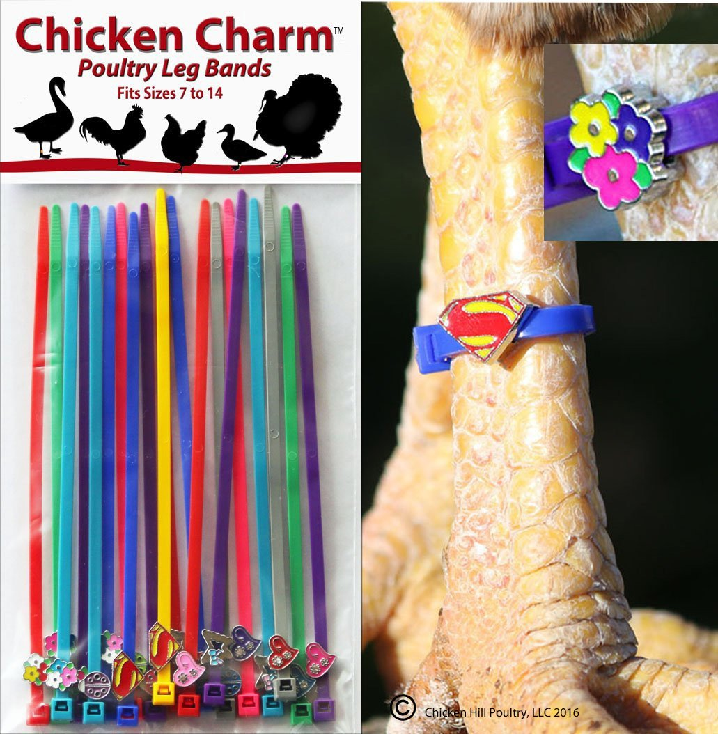 20 Chicken Charm Poultry Leg Bands - Fit Sizes 7 To 14 10