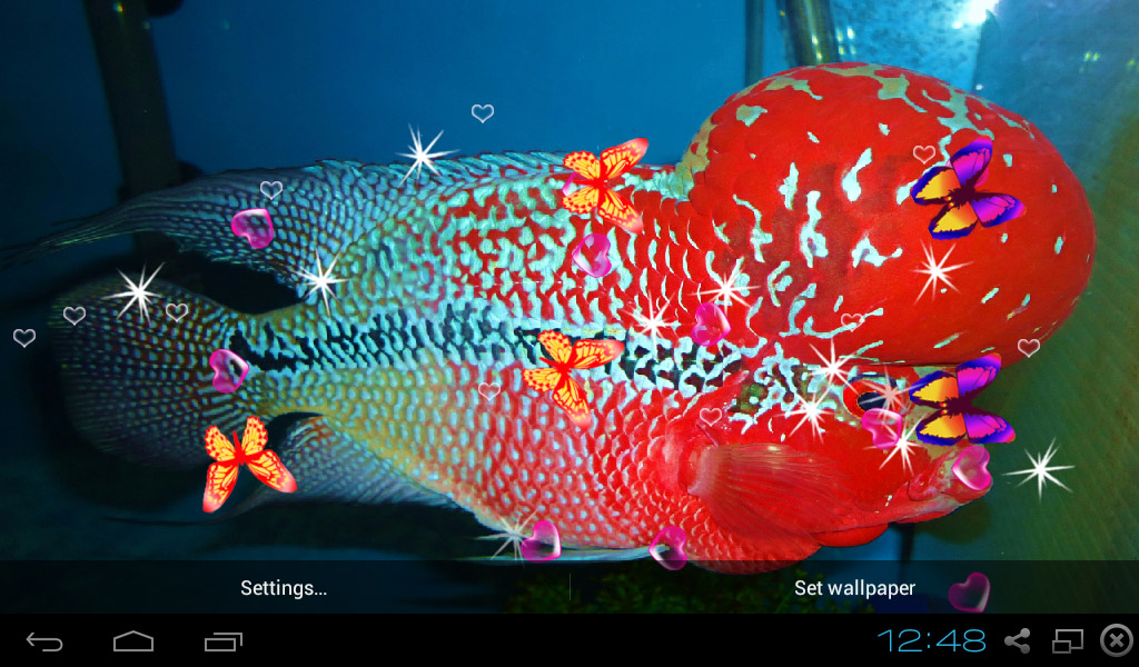 Amazon Com Beach Hd Wallpapers Appstore For Android: Amazon.com: 3D Flowerhorn Cichlid Live Wallpaper: Appstore