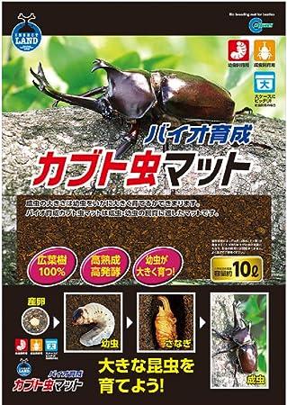 カブトムシ 幼虫 土から出る