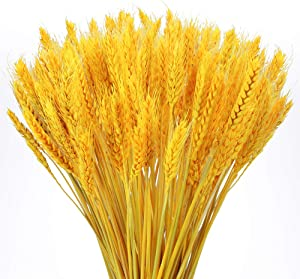 XYXCMOR 100PCS Natural Wheat Stalks Golden Dried Wheat Sheaves Premium Dried Flowers Bouquet Floral Arrangement for Vase DIY Home Wedding Table Wreath Spring Summer Decor