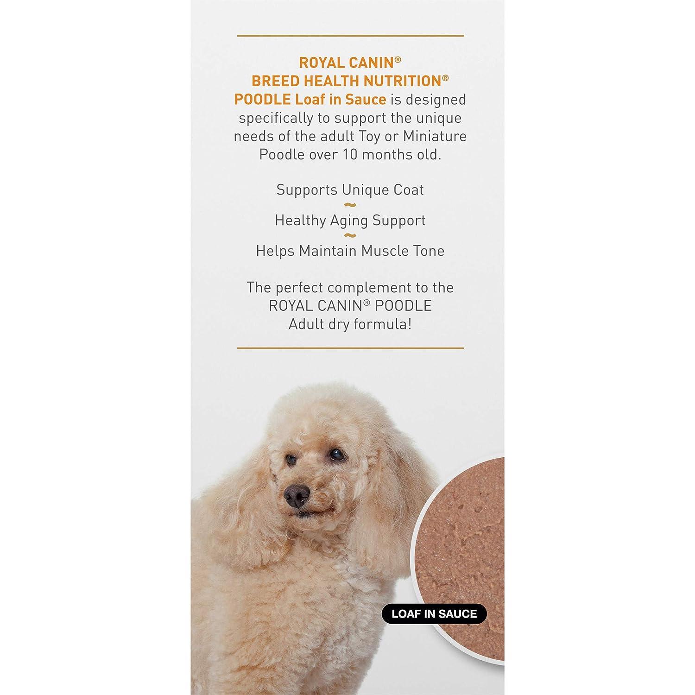 Amazon.com: Royal canin raza Salud Nutrición Loaf en salsa ...