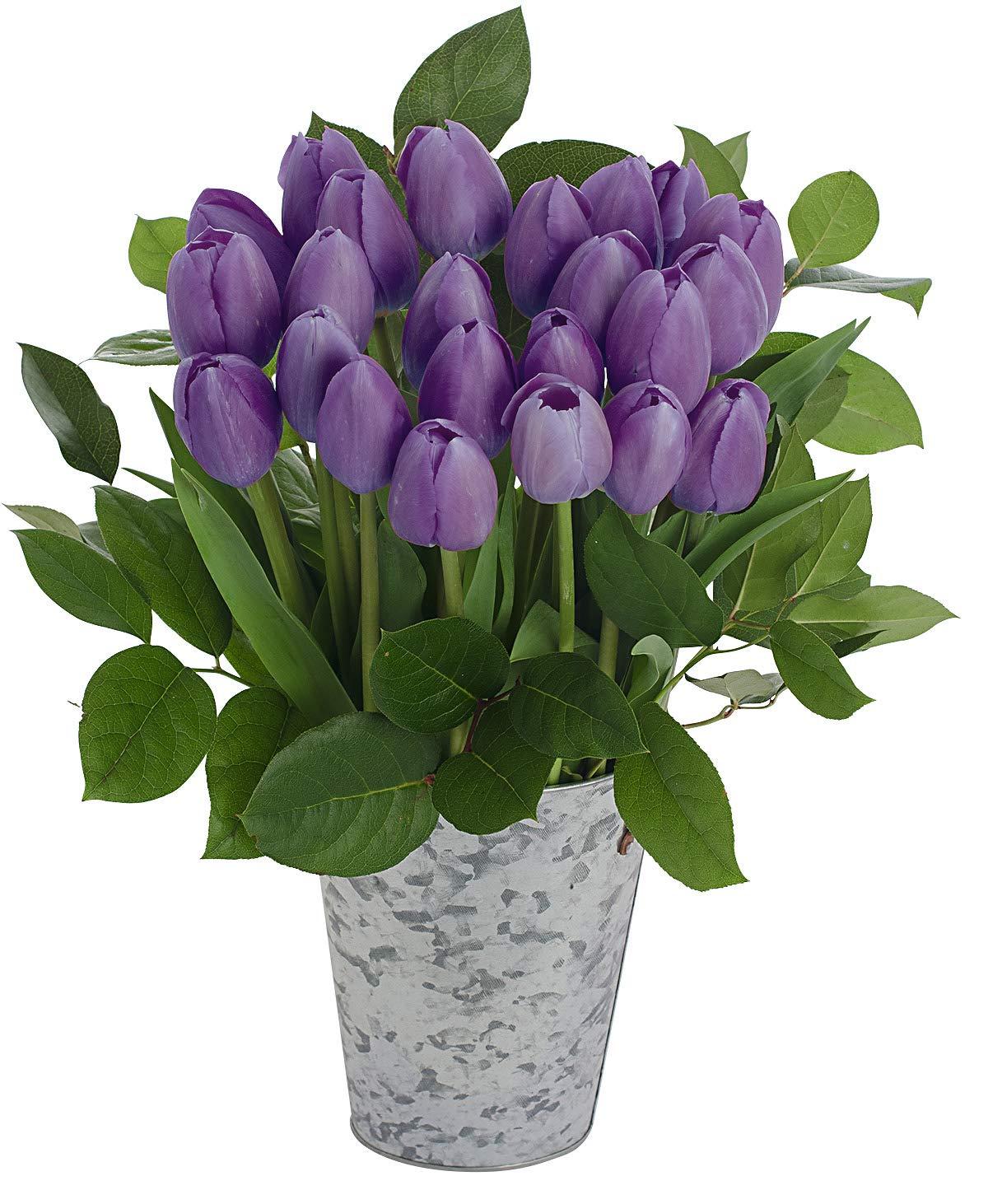 Stargazer Barn Dynasty Bouquet 2 Dozen Purple Tulips with French Bucket Style Vase by Stargazer Barn