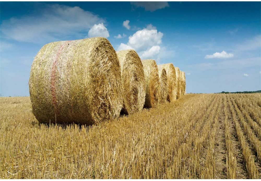 DORCEV Polyester 6x5ft Auntmn Field Scenery Backdrop Autumn Harvest Theme Party Wedding Ceremony Birthday Party Background Hay Blue Sky Field Harvester Room Wallpaper Autumn Photo Studio Props