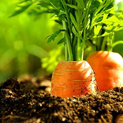 Garden Flower Plant Seeds 100Pcs Carrot Seeds Healthy Vegetable Balcony Potted Plant Home Garden Decor : Garden & Outdoor