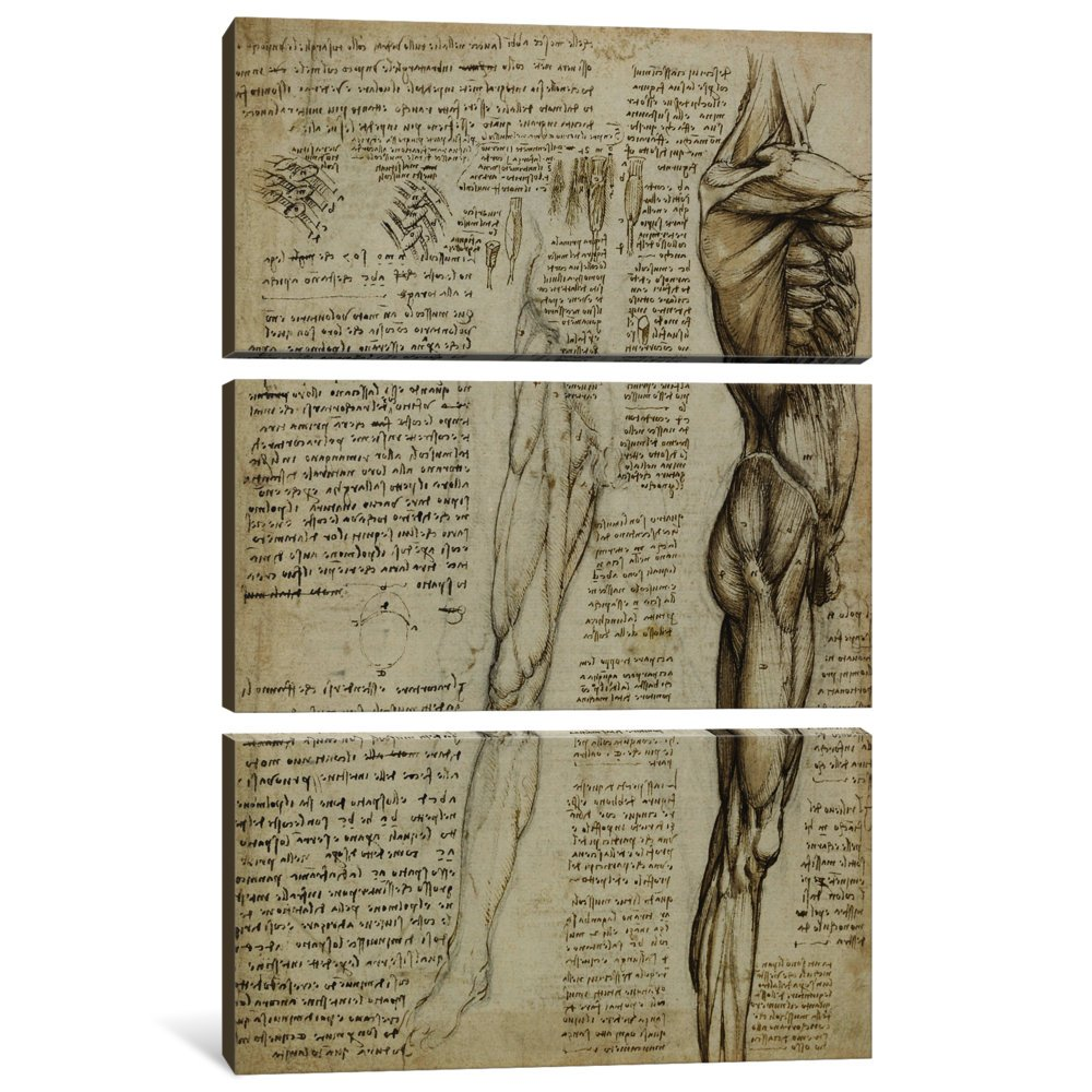 1511 Canvas Print by Leonardo da Vinci iCanvasART 3-Piece The Muscles of The Leg 0.75 by 40 by 60-Inch