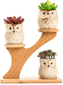 LukieJac Cute Owl Succulent Pots with Bamboo Saucers Stand Holder,Handmade Animal Planter for Cactus&Desk Plants-Owl Decor Gift for Office Desk| Bookshelf| Windowsill| Tabletop-Plants Not Included