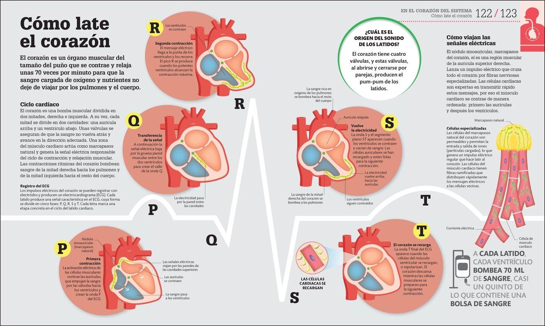 cmo funciona el cuerpo humano gua grfica de nuestro organismo amazones dk libros