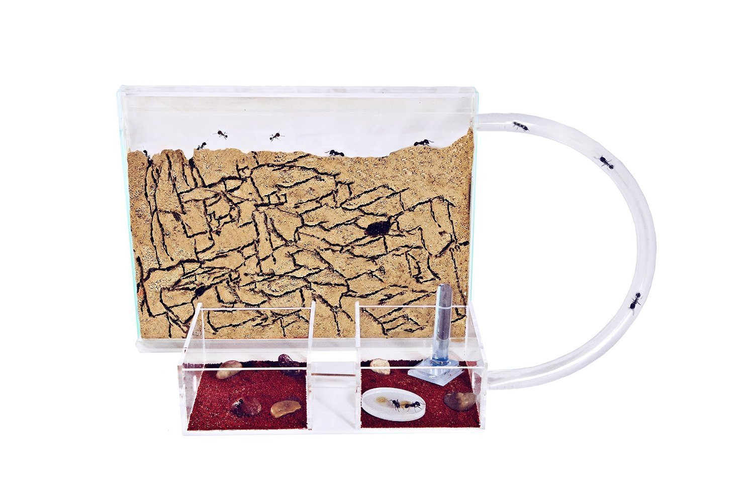 Sand Ant Farm Medium (Anthill, Formicarium, Educational, Ants) by anthouse