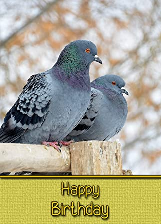 Racing homing pigeon birthday card 8x6 mix match on 8x6 cards racing homing pigeon birthday card 8x6 mix match on 8x6 cards any 2 bookmarktalkfo Images