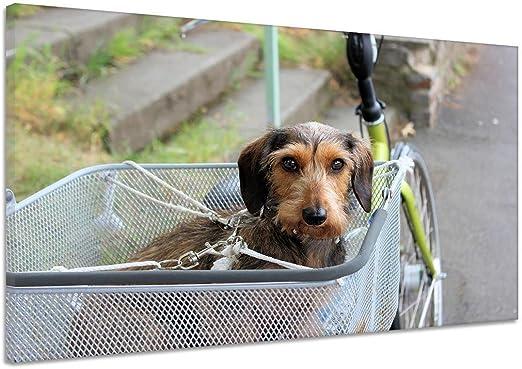 Perro mascota cesta de bicicleta nariz Red Lienzo Póster Impresión ...